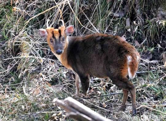 保护区里有脊椎动物430种,其中属于国家一级保护动物的有13种.