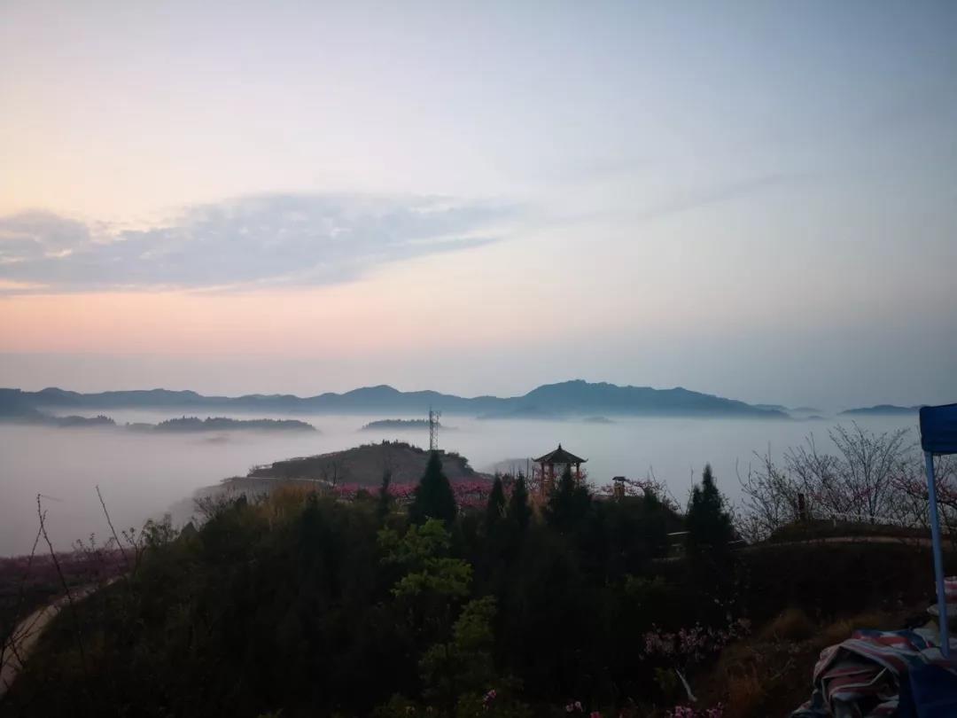 遂宁蓬溪八角村化身桃花仙境 未来几天晨起看桃花更美