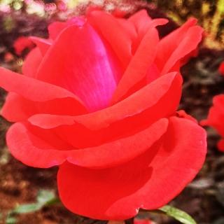 万紫千红春满园